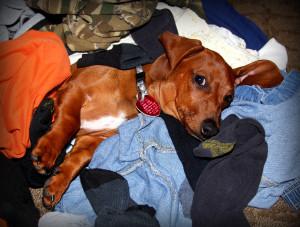 luigi laundry